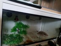 3ft vivarium
