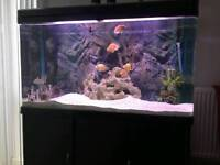 360L fish tank with the lot