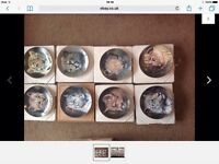 Princeton gallery limited edition Cubs of the big cat plate collection
