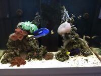 Marine aquarium live stock for sale (all inclusive, no individual pricing )