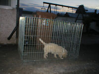 3 dog cages for sale,3 different sizes