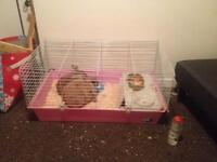 Male and female rabbit (URGENT)