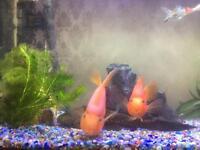 Looking for cheap 4 foot aquarium