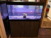 Fluval 200 ltr Aquarium
