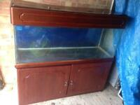 Large fish tank with cabinet and expensive set up