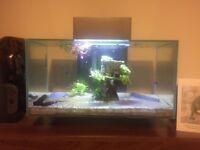 Fluval Edge Aquarium 23 litre in Pewter - Complete Setup