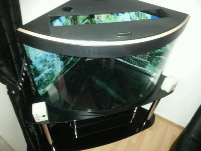 eckaquarium 190 l in k ln chorweiler aquarium und aquaristikzubeh r g nstig ebay kleinanzeigen. Black Bedroom Furniture Sets. Home Design Ideas