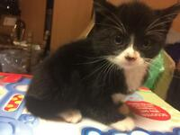 Fluffy male kitten