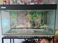 Large fish tank and stand