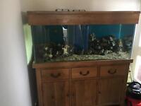 Solid oak fish tank