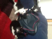4 kitten ready for a new home.Price is ono