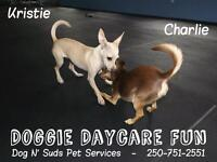 The Doggie Day Camp Lounge