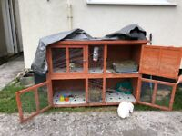 Rabbit and hutch for sale - 8/9 months old