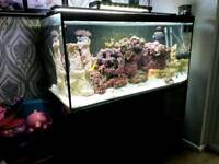 4 FT MARINE FISHTANK WITH BLACK CABINET IN IMMACULATE CONDITION