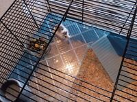 !!!!!HARRY THE ADORABLE ROBOROVSKI HAMSTER FOR SALE WITH FANTASTIC BIG BLUE CAGE !!!!!!!
