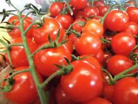 Apley Tomato Festival