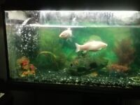 Goldfish/Catfish FREE for new home