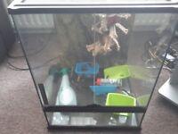 glass terranium