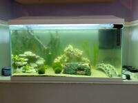 Fish Tank(Leddy 75)