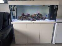 Full Marine aquarium set up- Juwel Rio 240L tank with cabinet and accessories