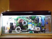 Aquarium and Accessories for sale