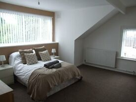 Newly Refurbished Executive Room - Available Now