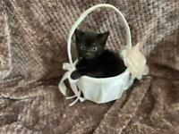 2 Playful boy kittens for new homes