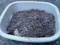LARGE QUANTITY OF OVAL NAILS 1CWT APPROX
