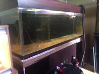 5ft fish tank aquarium