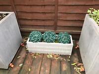 Garden box with three fake buxus
