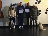 Kezza K9 Dog Services dog training walking