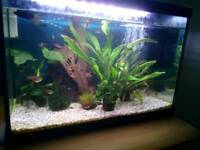 Superfish tank and contents for sale
