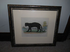 Framed Hand Tinted Copper Engraving of a Black Leopard