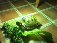 Lost Tortoise York Road Holland on Sea Clacton
