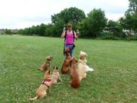 Dog trainer behaviour consultant