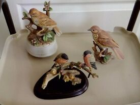 Ornamental Bird collection