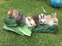 Baby Bunnies For Rehoming