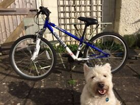 kid bike in very good condition (dog not included)