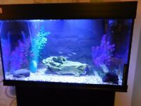 Lovely fish tank with stand and about 15 fish..