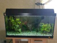 Fish tank and all the accessories