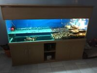 6ft tank for sale or swap for 5ft