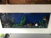 Wall Fish tank setup with light filter heater