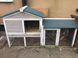 Guinea pig and hutch