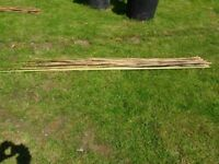 24 x Bamboo garden Plant Support Canes. Mixed lengths. Home grown.