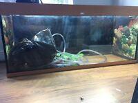 Juwel Rio 240 fish tank