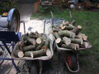 Freshly cut logs meadem size 2 ton