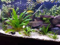 4ft tropical aquarium full set up
