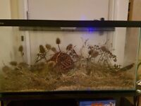 Harvest mice and tank