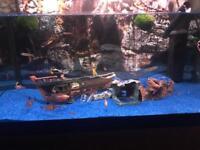 Beautiful 65 litre fish tank