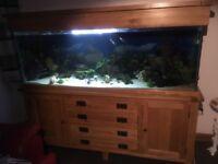 Aquarium/fish tank solid oak 420 l